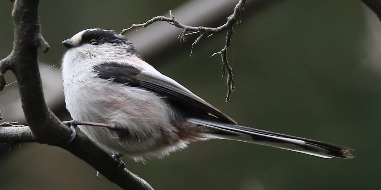 bird-k-20211120