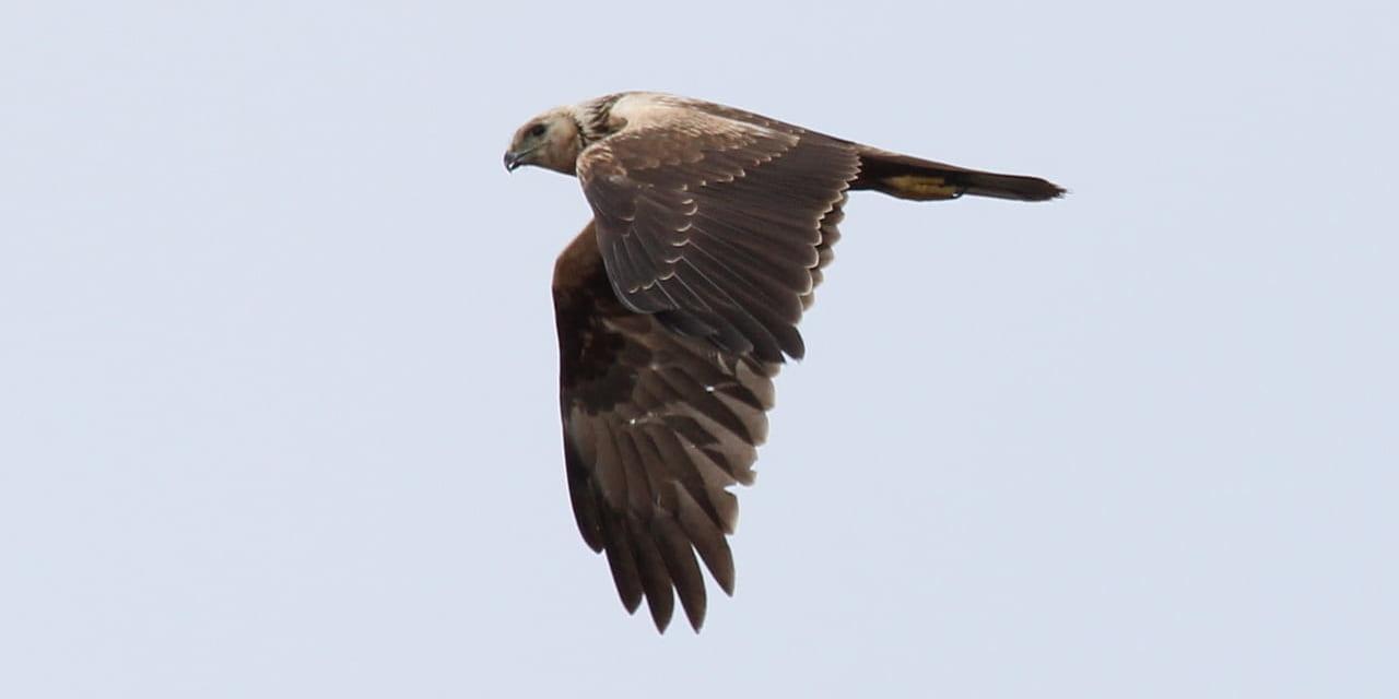 bird-k-20211225