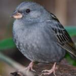 bird-k-20220122